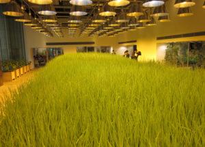 Trồng cây trong văn phòng công ty Nhật