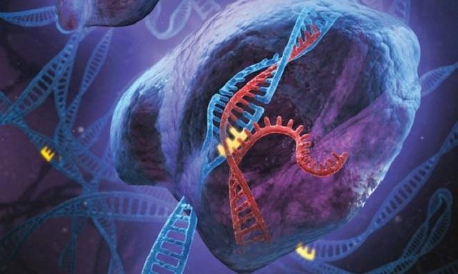 Ung thư, HIV có khả năng chữa khỏi bằng kĩ thuật can thiệp hệ thống miễn dịch